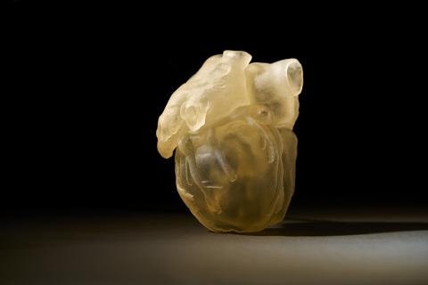 3d tisk model srdce