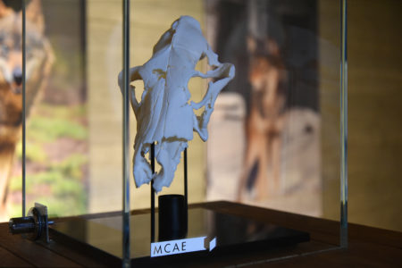 3D tiskárna vytiskla lebku