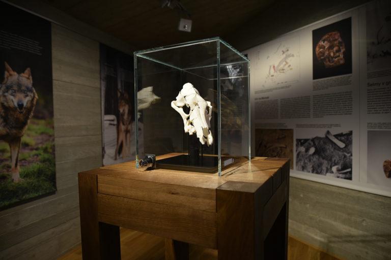 Lebka z 3D tisku