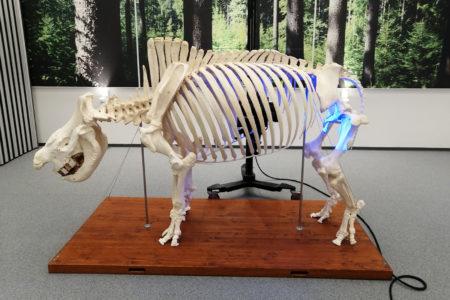 3D skenování nosorožce