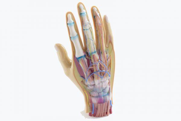 3d tisk digitální anatomie | medicínské modely